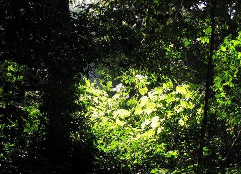 shades of green, nandi hills