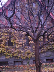DSCN1758 (Barbarella Jones) Tags: newyork buildings bronx gloom