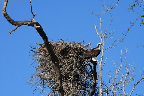 Everglades National Park 12-1-07 185