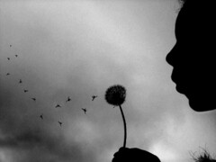 I Must Belong Somewhere (Isaac Leedom) Tags: sky girl silhouette clouds photoshop hair claire moody cloudy grain blowing competition blow best seeds final choice dandilion scholastic trailing bwdreams