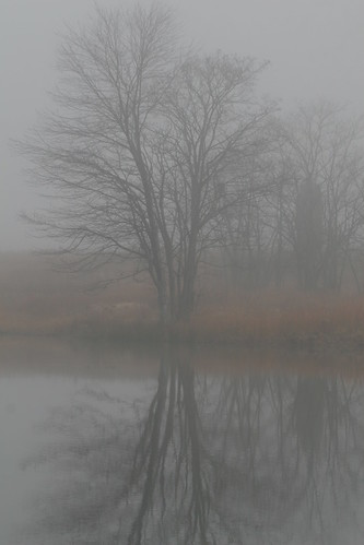 Tree in Fog