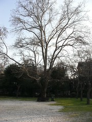 Kifissia Park (karpidis) Tags: park kifissia vrypan vrypanspodcastpark