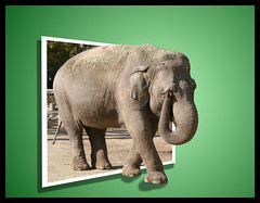 Elephant OOB (persue23) Tags: elephant oob photofaceoffwinner photofaceoffgoldmedal photfaceoffwinner pfogold clevercreativecaptures
