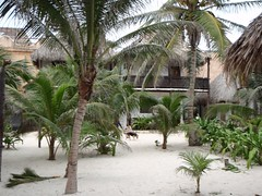 P1030294 (FlckrBrnd) Tags: sun beach tulum palmtree mexiko yuccatan