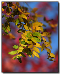 Autumn Colours (Lisa-S) Tags: blue autumn red colour tree green fall leaves yellow canon bokeh lisas vivid allrightsreserved primarycolors primarycolours naturesfinest 4009 hbw s3is canons3is abigfave platinumphoto colorphotoaward diamondclassphotographer flickrdiamond theunforgettablepictures colourartaward artlegacy betterthangood copyrightlisastokes