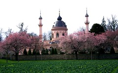 zierkirschen_4a-100308 (siggi2234) Tags: märz frühling schlossgarten schwetzingen moschee kirschblüten zierkirschen shwotan siggi2234 siegfriedhuebner kirschblüüten