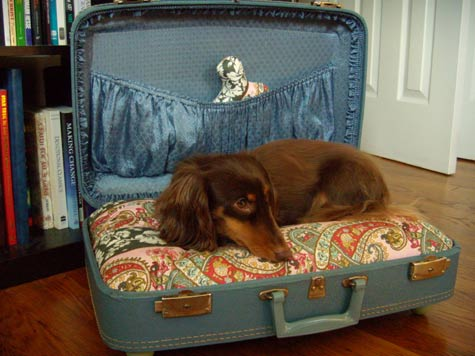 Turn Suitcase into Dog Bed
