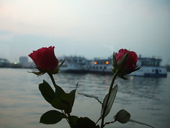 Roses and Barges