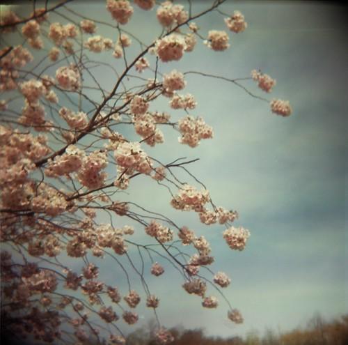 softest pink petals
