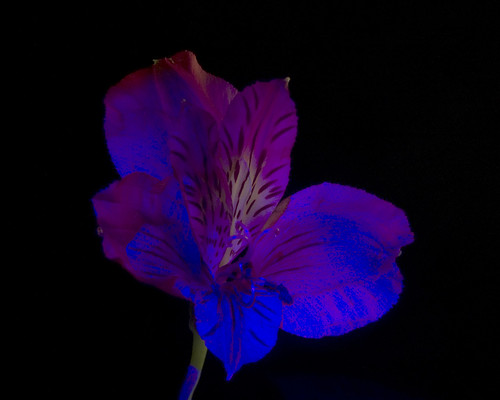 UV Flowers, Plate 3