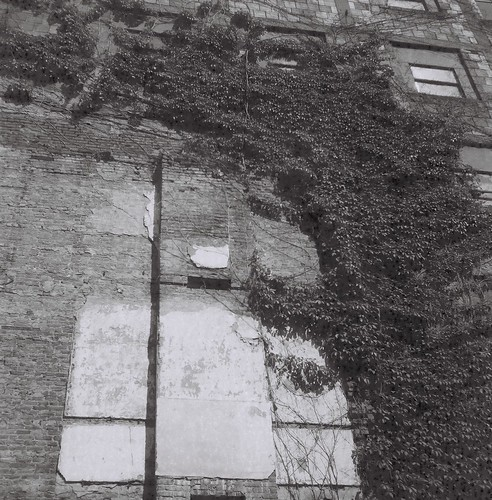 Vines and Brick Wall, Свема (Svema) Russian Film, ГОСТ 64