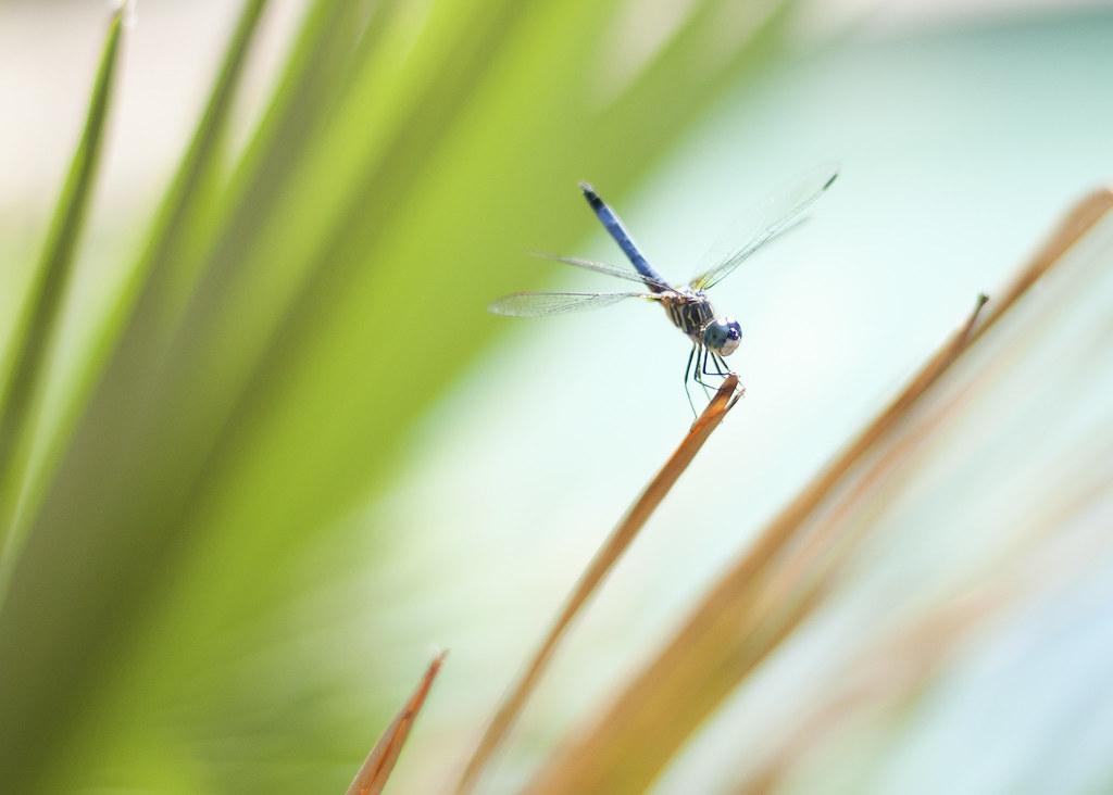 dragonfly, summer 2011
