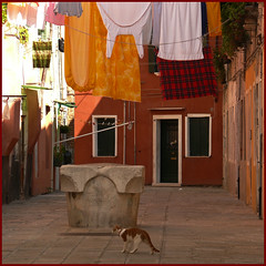 rabbit suit, hanging down... (Frizztext) Tags: venice italy cat square interestingness italia clothes galleries barbara clothesline venezia italians themoulinrouge oct12 50faves frizztext colorphotoaward 20071012 thecatwhoturnedonandoff