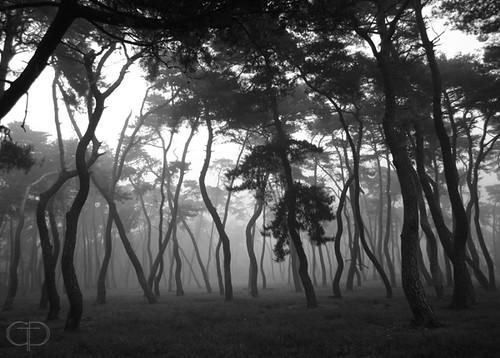 Among The Trees(경주2005년)