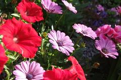 Summer Flowers #2