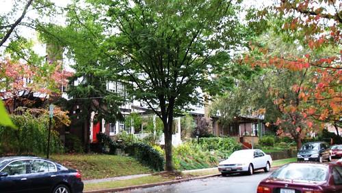 street trees in my neighborhood