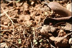 Bug (baroqueboudoir) Tags: tree nature canon bug 350d leaf canon350d ladybug leafs 1740l canon1740l
