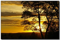 Sunset Silhouette (2) (Roger Lynn) Tags: autumn sunset tree fall silhouette moscow branches idaho universityofidaho palouse