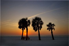 Setting Sun (riclane) Tags: sunset sky sun holidays florida palm clearwaterbeach clearwater blueribbonwinner flickrsbest superbmasterpiece diamondclassphotographer flickrdiamond