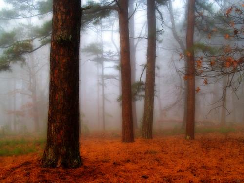 Foggy Mt. Nebo
