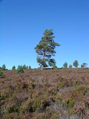 loch an eilean (gmj49) Tags: trees scotland heather scottish highland appenninosettentrionalealpinatura gmj49 shareyourtalent bestofbritishnature photosrus