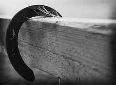 Cobweb.. (Courtney_Louise) Tags: blackandwhite bw horse shoe web cobweb horsehoe