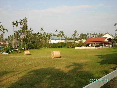 綠盈盈的草地