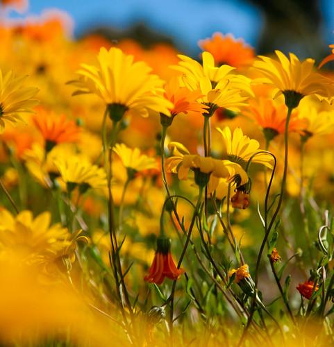 Spring Incarnate