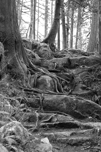 Minnekhada Park Tree Roots Cropped