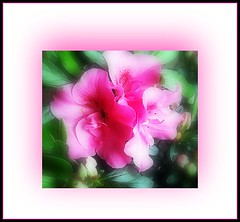 Waiting for it to flower (craftedfromtheheart) Tags: pink flower nature bush flora vivid australia melbourne victoria flickrcentral inspire mtdandenong soe fineartphotography azaela naturesfinest allyouneedislove mywinners pinkalicious flickraustralia shieldofexcellence diamondheart anawesomeshot ultimateshot superbmasterpiece ithinkthisisart diamondclassphotographer flickrdiamond citritbestofyours freenature excellentphotographersaward defendersmacroandcloseupgroup goldsealofquality mrsflowersmagicalgarden thegoldenflower bestcasescenery allkindofbeauty theinspirationtree creativeartphotography