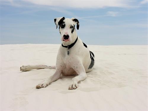 Stella of the Dunes