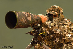 - Sniper (N-S-S) Tags: bird birds army nikon sigma kuwait nikkor  nasser 800mm d300  nss  vwc   d2xs    kvwc    alsolihem