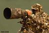 قناص  - Sniper (N-S-S) Tags: bird birds army nikon sigma kuwait nikkor مركز nasser 800mm d300 الكويت nss كويت vwc ناصر العمل d2xs نيكون تخفي التطوعي kvwc سيجما قناص الصليهم alsolihem تمويه