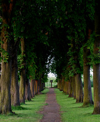 Green Symmetry (juliaclairejackson) Tags: park trees green nature grass season evening vanishingpoint spring alley solitude quiet path vibrant perspective symmetry line growth greenery symmetrical lush shady luscious chesnut chesnuttree