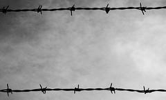 Anglų lietuvių žodynas. Žodis barbed reiškia a spygliuotas; aštrus; barbed wire spygliuota viela; barbed words kandūs žodžiai lietuviškai.