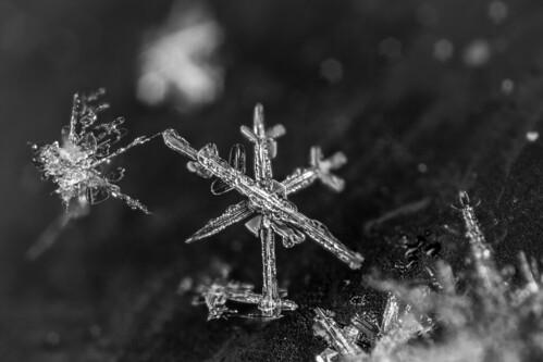 Flocons / Snowflakes