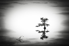 Loneliness (Eduard Moldoveanu Photography) Tags: lrthefader lakemattamuskeet northcarolina outerbanks tree usa alone art background beautiful black calm clouds exposure fine fineart horizon lake landscape lone lonely long monochrome morning mountain moving natural nature new outdoor outdoors pastoral peace peaceful photography photos pinhole poetic reflection scene scenery scenic sea serene silhouette single sky solitude southeast summer toned tranquil tranquility travel vacation water waterscape white fairfield nc