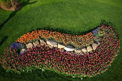 technicolor paramecium (KAP'n Craig) Tags: kite tulips aerial kap middleton stopthecar fromakite myrodsandconesarevibrating