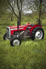 Old Massey Ferguson (N.Lorenzoni) Tags: ohio tractor farm restored hdr farmequipment lawnmover masseyferguson