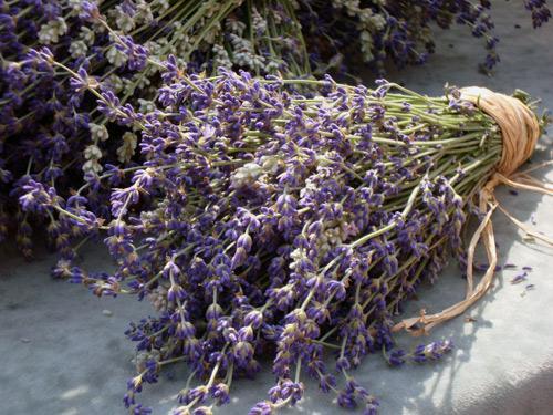 6-4-lavender-2