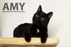 Amy (Oliver Pietern) Tags: cat canon germany deutschland kitty domestic nrw katze paws shelter suchen oberhausen tierheim homeles tierschutz katzenhilfe