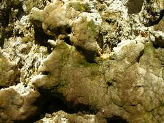 Calcified moss?