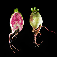 (Splat Worldwide) Tags: pink food green canon studio eos floating vegetable explore 5d root radish crosssection bisection alienbees watermelonradish 1635mmf28l