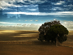 on the road by bus (_tonidelong) Tags: road travel viaje bus tree nature arbol autobus ontheroad granadacaceres