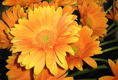Para o gabi! (Mariza Lacerda Gomes) Tags: flores flres