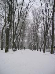 (Alexandru Simionesei) Tags: park winter white snow cold alex nice romania parc iasi copou rawtheme alexsimionesei aplusphoto top20white top20everlasting hunt3r rawtheme20122007