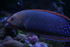 121207AY (mads momma) Tags: ocean fish hawaii acquarium center maui