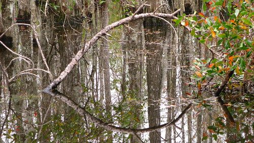 Swamps near Bay St. Louis, Mississippi, USA