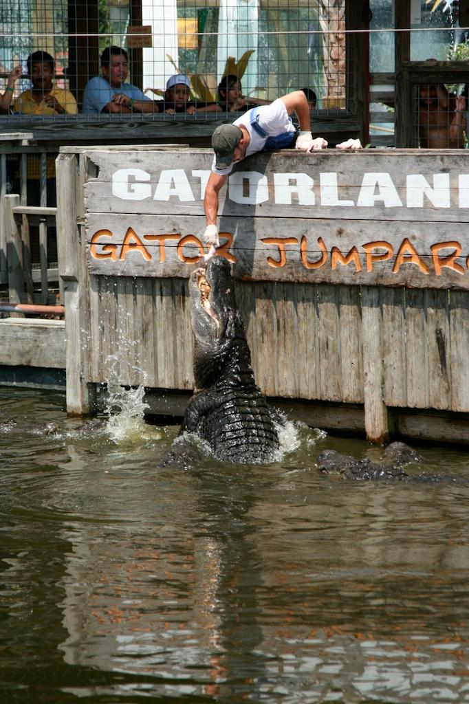 Gatorland 07- 95