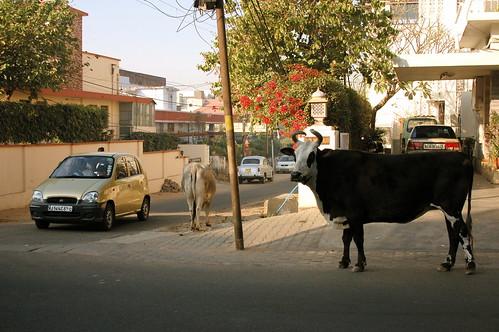 the very essense of modern india